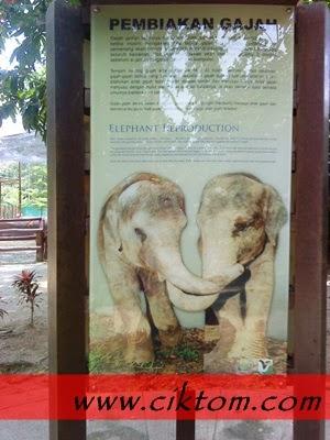 Cara pembiakan gajah
