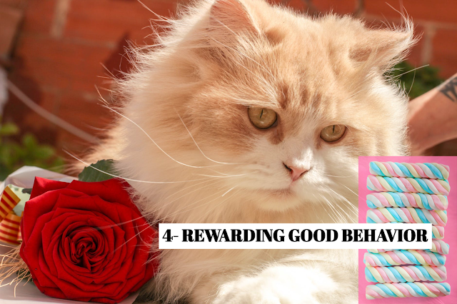 Cats respond better to rewards than discipline. Rather than reprimanding your cat for unwanted behavior like scratching the sofa, give it a cuddle or food treat every time it uses the scratching post. Be sure to provide the reward right after the cat displays good behavior, so it will associate the two. *FAVORITE TREAT Some cats enjoy food treats. For others, soothing words, a stroke or a vigorous play session are better rewards.