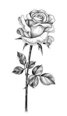 Sketsa bunga mawar untuk tato