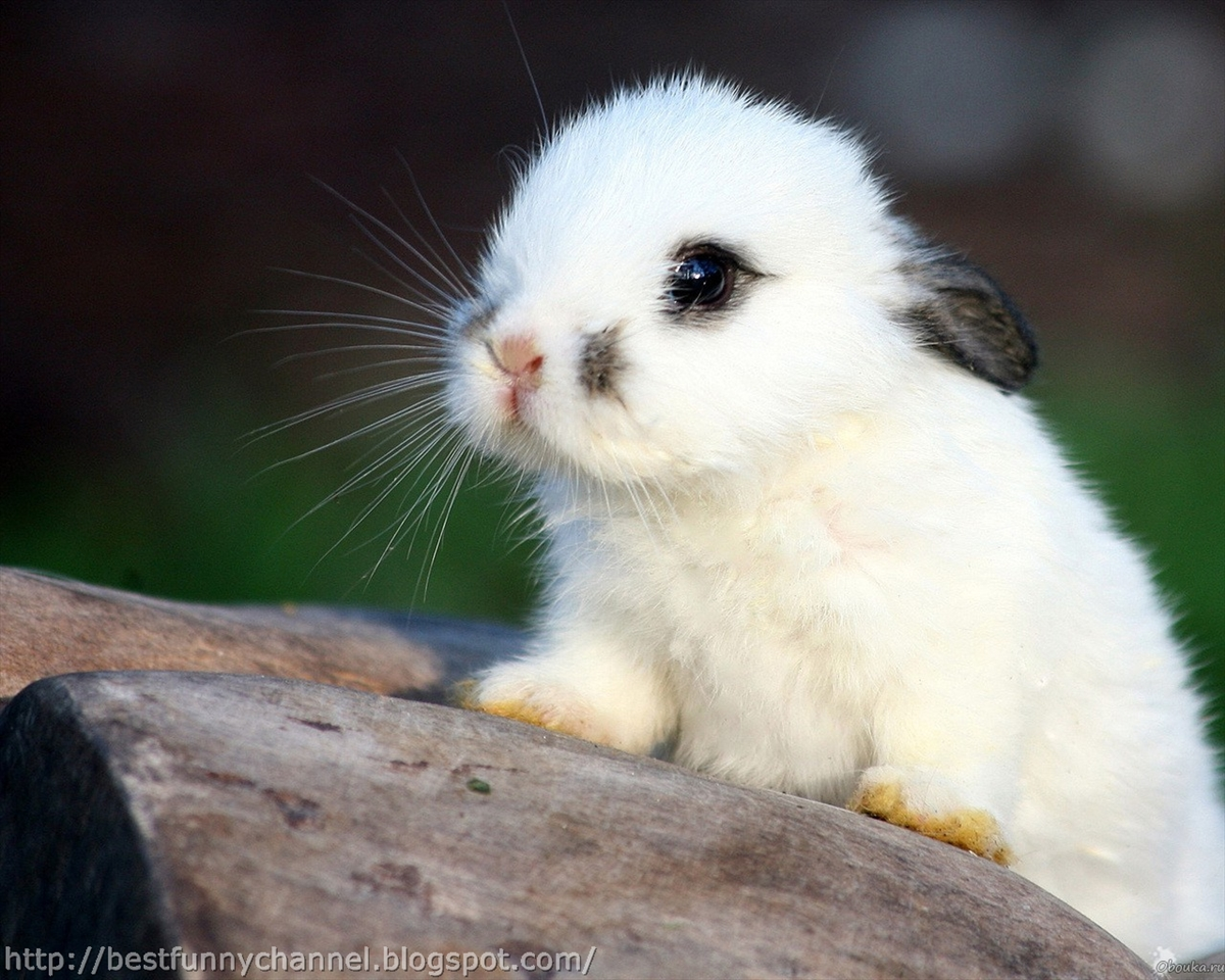 Cute and funny pictures of animals 62. Bunnies 7. - photo#28