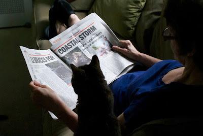 educated cat - photo #36