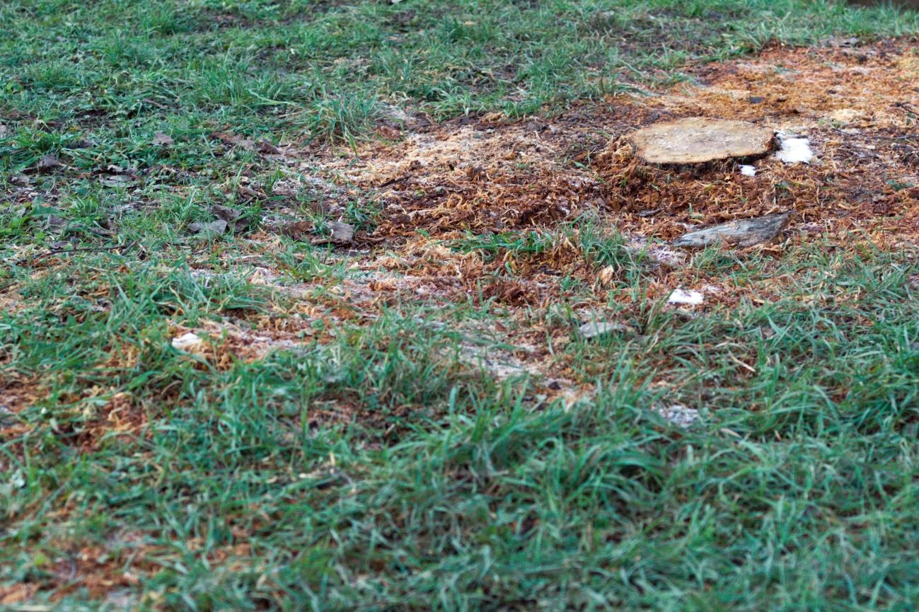 Bilder des Tages #15 — Der Bibernagebaum ist weg