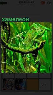 зеленый хамелеон среди зеленых насаждений еле заметен