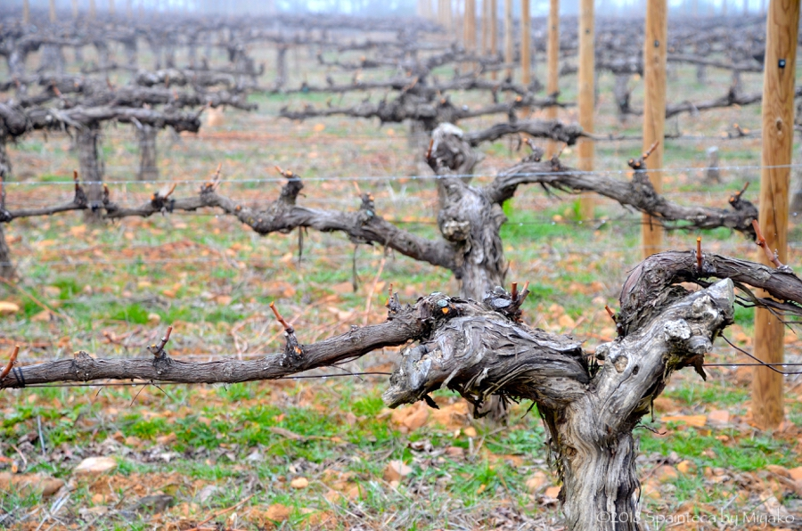 Dehesa del Carrizal スペインのパゴワイナリー・デエサ·デ·カリサルの葡萄畑