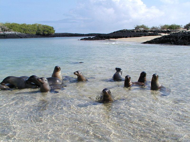 Isla Santa Cruz - Galápagos