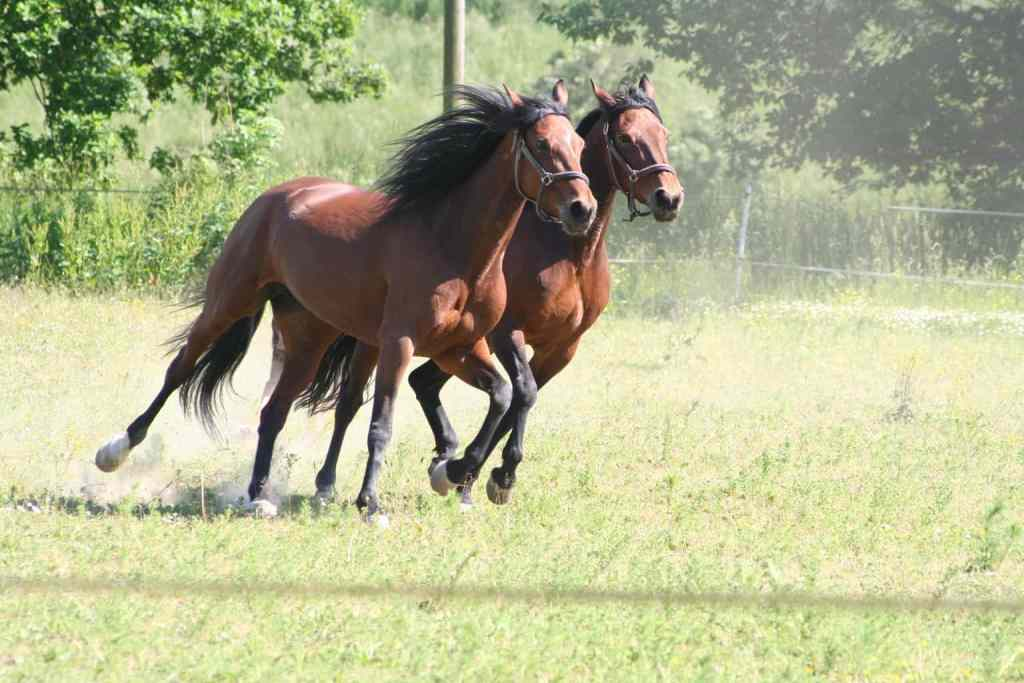 Breeding Horses: The Mare's Cycle and Reproductive Care