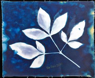 Wet cyanotype -Sue Reno_Image 663
