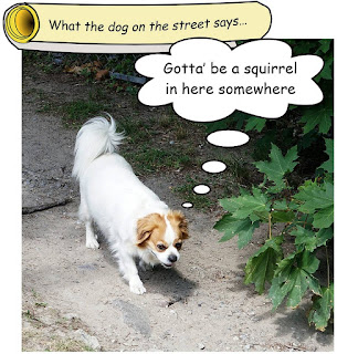 http://dogsarefun.club/2016/08/02/fun-for-dogs-in-the-woods/