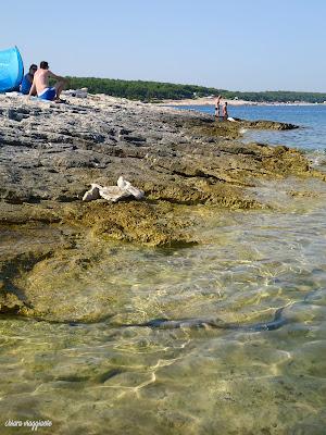 RT Kamenjak - Premantura Istria