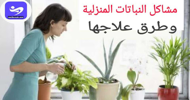 مشاكل النباتات المنزلية وطرق معالجتها