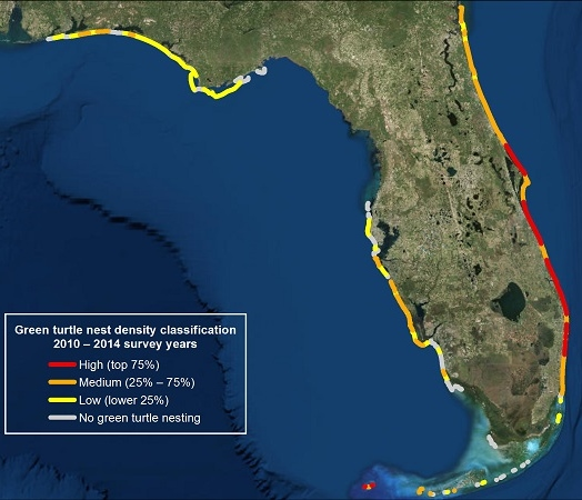 Green Sea Turtle Nesting Florida Mapp