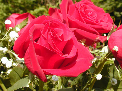 Lovely romantic valentines day flower wallpapers