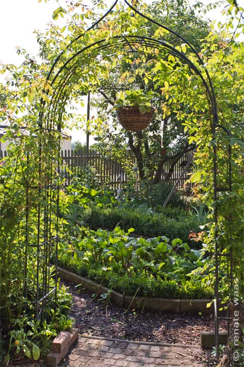 Gartenblog geniesser garten gemuesegarten juli - Geniesser garten ...