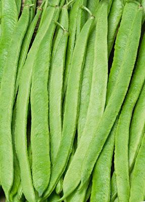 Scarlet Runner Beans - Grean Beans
