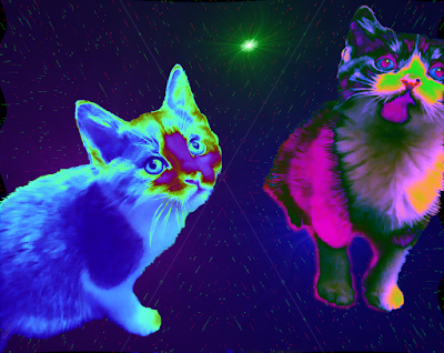 Two kittens in space with color warping