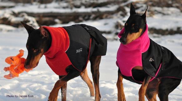 Gwn Winter Coat Sale Burnt Orange Black Chilly Dogs Blog