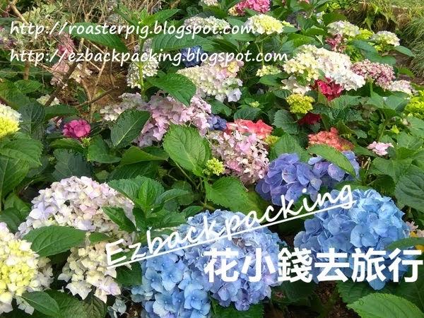 日本繡球花:大阪+京都紫陽花開花記錄