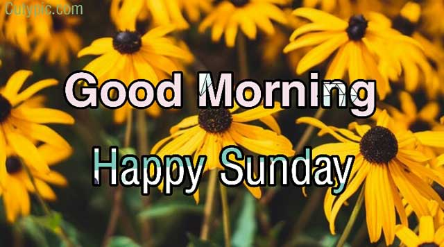 Good morning happy Sunday images, wallpaper, photos