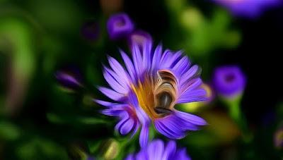 Fauna, Flora, Tiere, Vögel, Fische, Insekten, Blumen, Bäume, Berge, Meer, Ozean, Natur, Sonne, Mond, animals, birds, fish, insects, flowers, trees, mountains, sea,