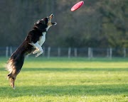 Top 10 Best Frisbees For Dogs in USA 2021