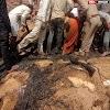 शॉर्ट सर्किट से लगी आग ने दो घरों की गृहस्थी उजाड़ी, लाखों रुपए के नुकसान के साथ 5 बकरियां जिंदा जलीं