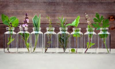 Αυτά είναι τα βότανα που καταπολεμούν άγχος και στρες