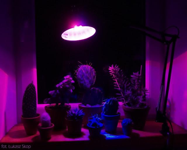 grow led żarówka do roślin w mieszkaniu