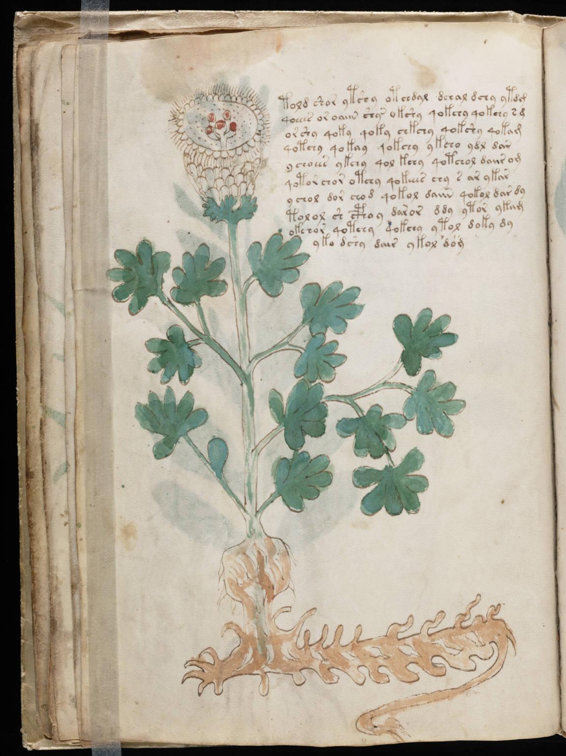 manuscrito036