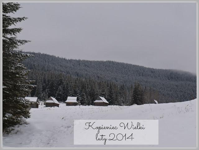 https://www.rudazwyboru.pl/2014/03/kopieniec-wielki-zima.html