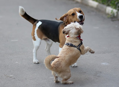 15 Dog Friendly Dog Breed Are The Best for Getting Along With Other Dogs