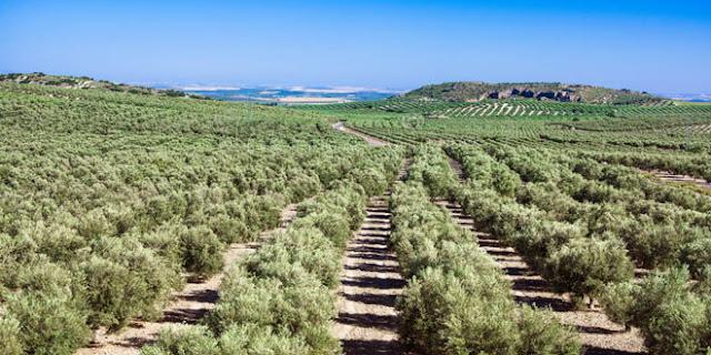 Τι απάντησε ο Λιβανός στον Ανδριανό για τις ζημιές στην καρπόδεση των ελαιοδένδρων στην Αργολίδα