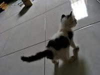 Kiko Again