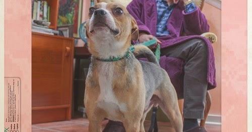 Big Kahuna OG & Graymatter-Scooby Snax-2017