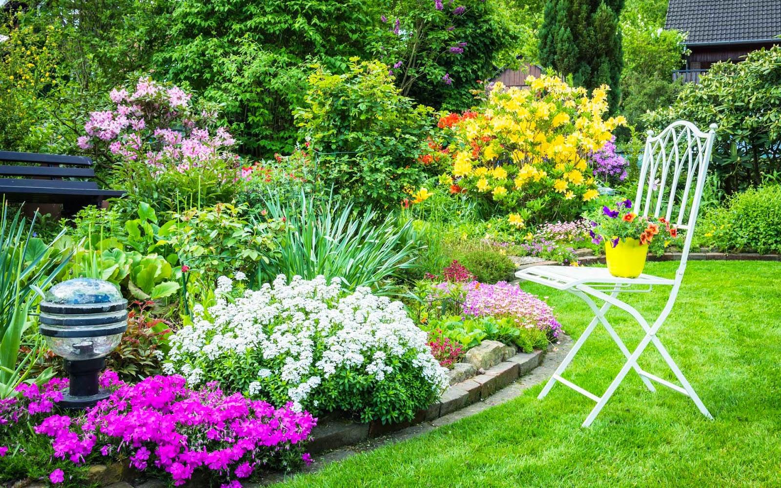 Prachtige tuin met bloemen