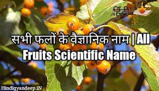 सभी फलों के वैज्ञानिक नाम | All Fruits Scientific Name with List in Hindi