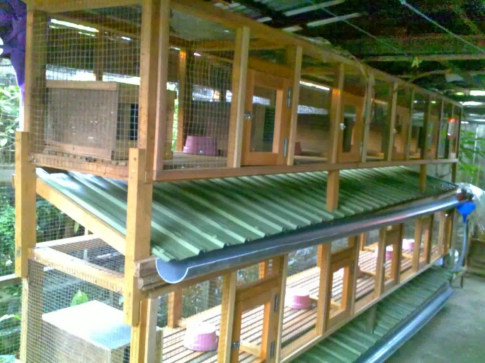 Budidaya & Beternak kelinci lokal | Budidaya Aneka