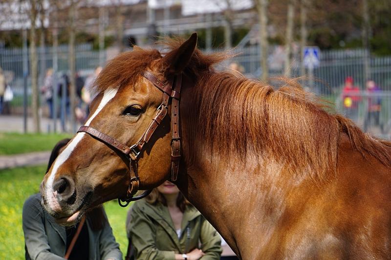 hevonen, kaivopuisto
