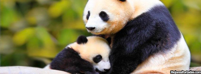Wallpapers Osos Panda Tiernos