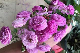 giá thể hoa hồng