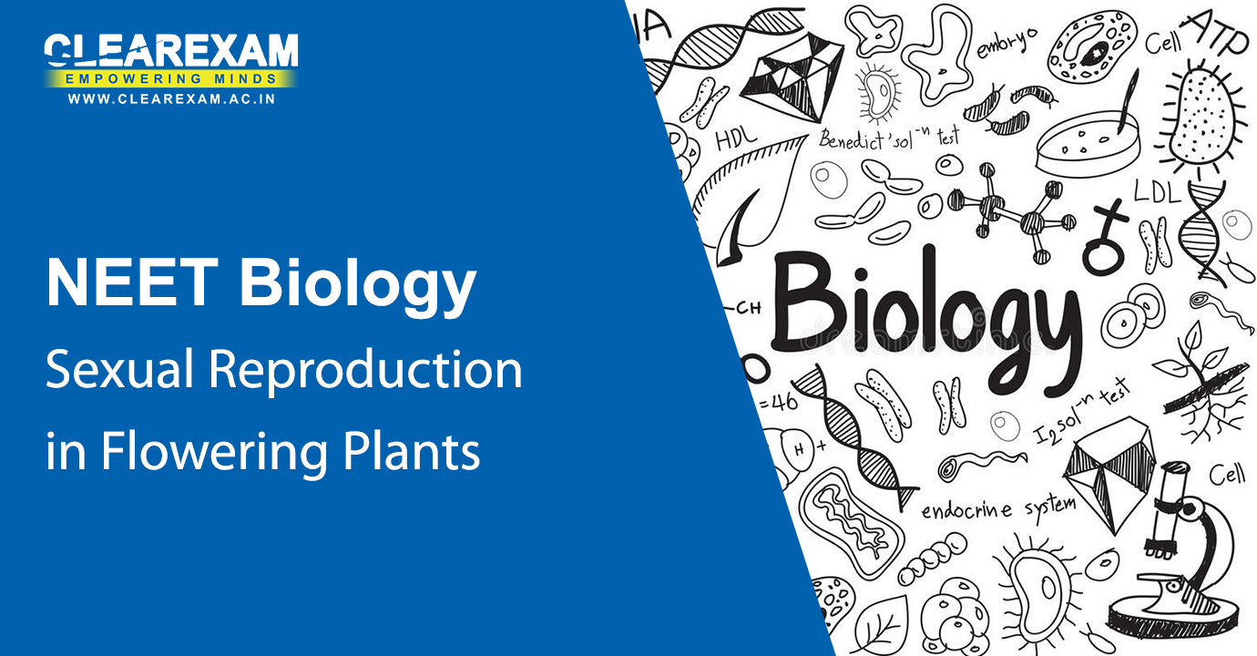 NEET Biology Sexual Reproduction in Flowering Plants