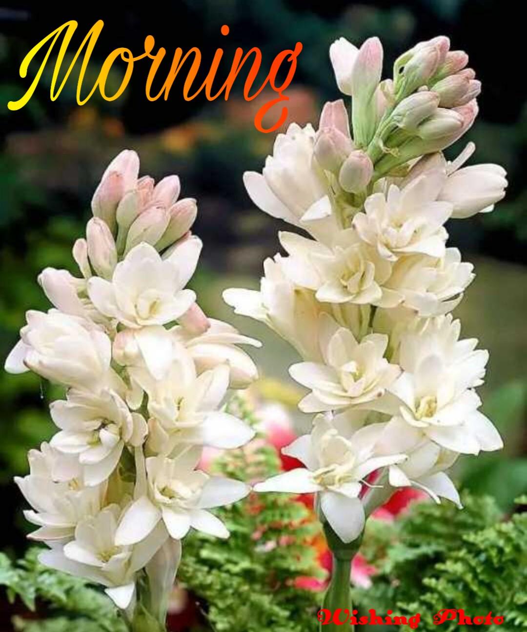 New 631 +good Morning Image || Good Morning Images Quotes || Good Morning Image For Love || Good Morning Image Download || Good Morning Images For Whatsapp