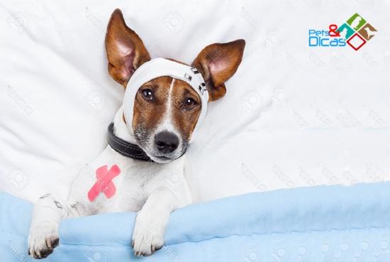 Como fazer curativo em cão