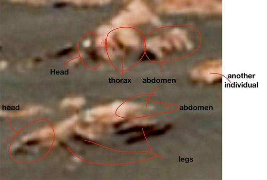 Prova fotográfica de vida alienígena complexa em Marte - Img 2