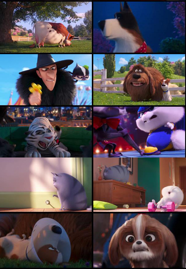 Download The Secret Life of Pets 2 2019 Dual Audio Clean Hindi 480p WEB-DL 300MB movie
