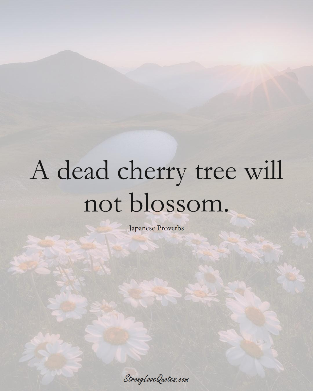 A dead cherry tree will not blossom. (Japanese Sayings);  #AsianSayings