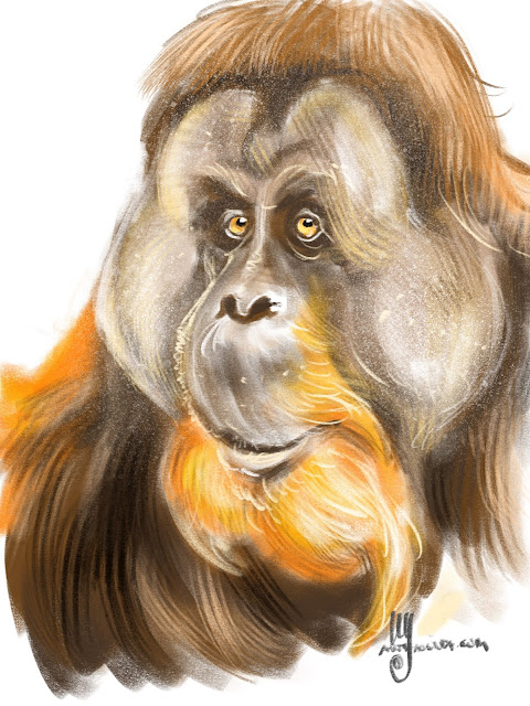 Orangutan sketch by Artmagenta
