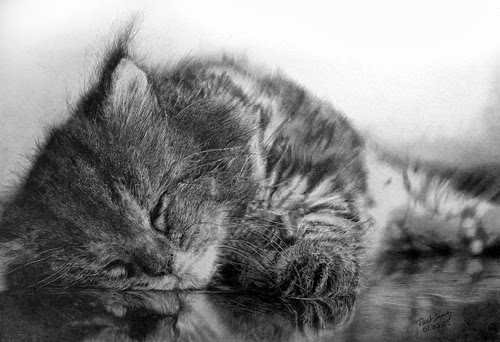 01-Hyper-realistic-Cats-Pencil-Drawings-Hong-Kong-Artist-Paul-Lung-aka-paullung-www-designstack-co