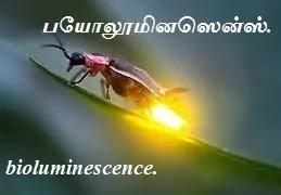 Firefly bioluminescence.