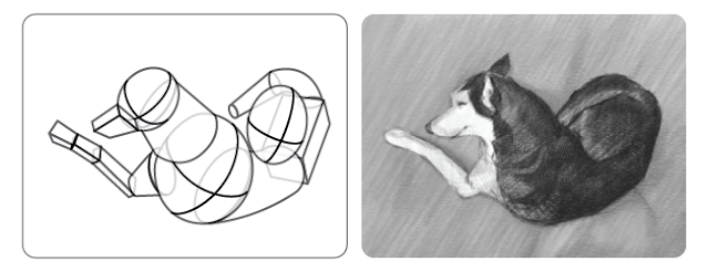 The simplified forms used to set up this drwing of a dog.