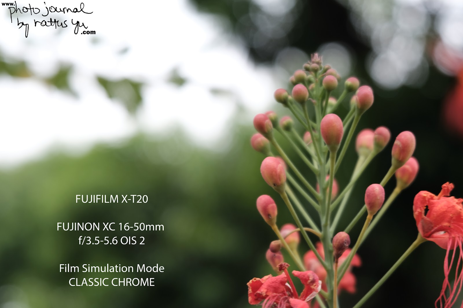 FUJINON Super EBC XC 16-50mm f/3.5-5.6 OIS 2